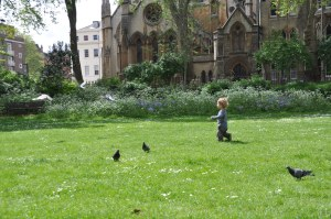 We're going on a pigeon hunt!